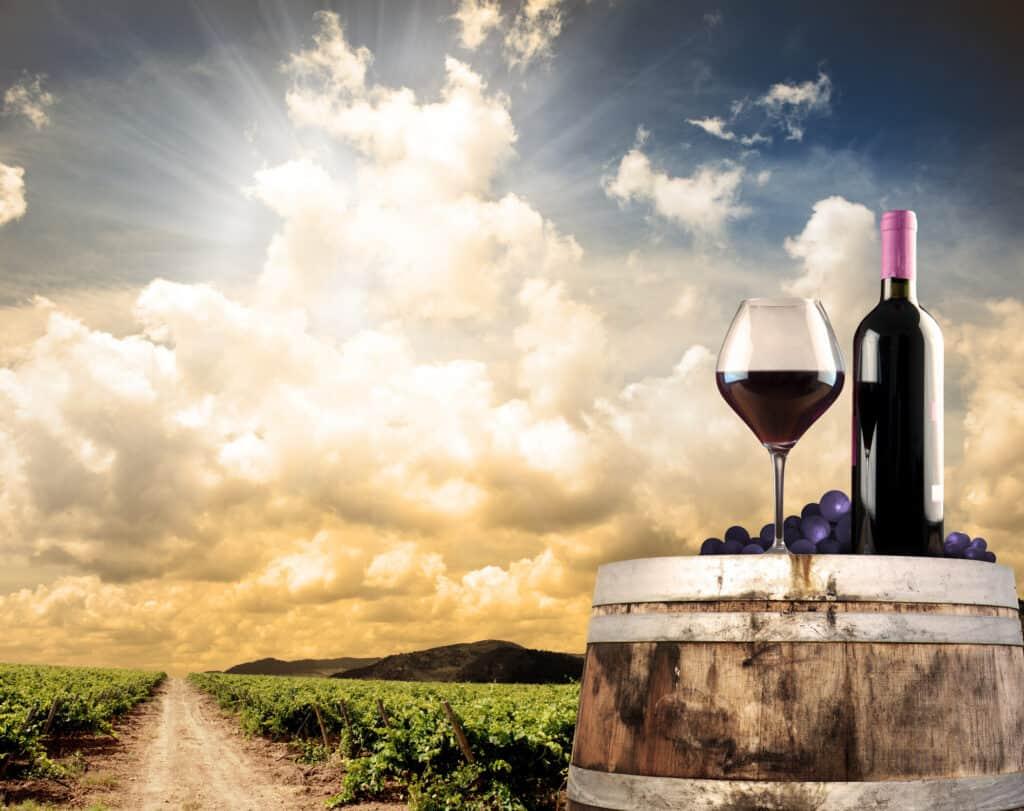 מדריך יין